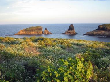 Flora Islas Columbretes islas columbretes
