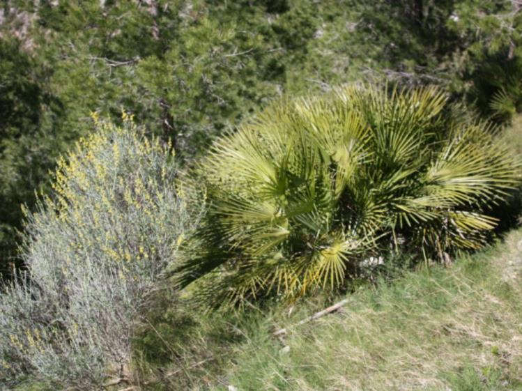 parque natural de la sierra de irta parque natural de la sierra de irta